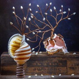 Still life photograph of seashells